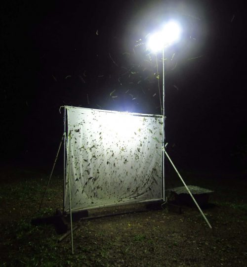 insect-light-trap-1