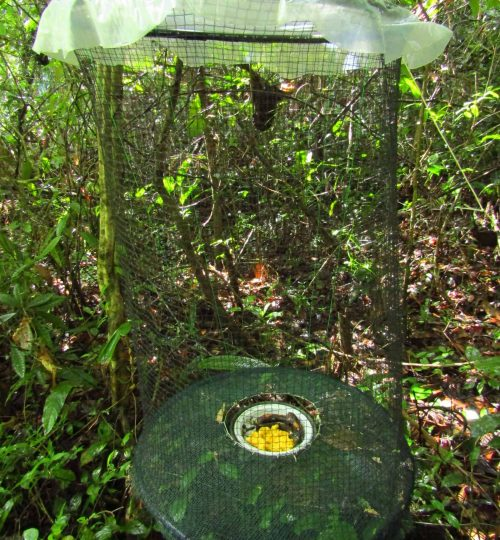 insect-traps-1